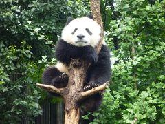 絶景の九寨溝・黄龍、かわいいパンダの成都の旅。