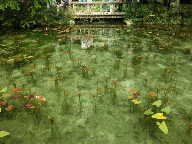 五郎丸選手のポーズをしている仏像で有名となった関善光寺とモネの池へ。<br />モネの池はかなり混んでいたがキレイではあった。