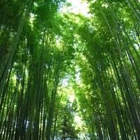 京都*竹林の道〜天龍寺〜渡月橋〜龍安寺