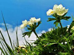 コレが私のAnother Sky☆空に咲く花〈利尻岳登山-後篇〉【歩く礼文・登る利尻-4】北限の頂に広がる 天空の花畑