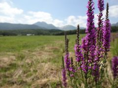 九州ふっこう割で熊本・大分 県境の旅