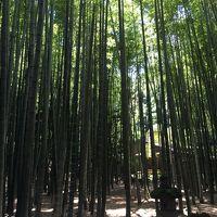 記念日旅行 鎌倉・江ノ島 ザ・カフェアマンのディナー ~今年は御機嫌斜めになりましたの巻~