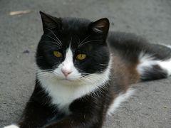 猫の癒しを求めて、田代島へGo!