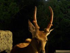 夏の北海道 鉄道と自然満喫の旅:1日目 旭山動物園とJRイン旭川