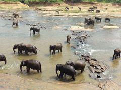 ピンナワラの象の孤児園