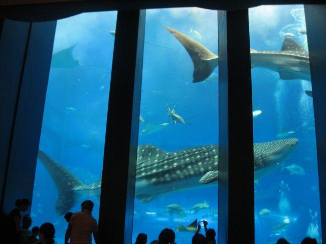 '16 沖縄旅行3 美ら海水族館① カフェ「オーシャンブルー」からジンベエザメを見る