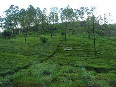 2016夏 スリランカ part2  ヌワラエリヤで紅茶畑が広がる風景に癒される