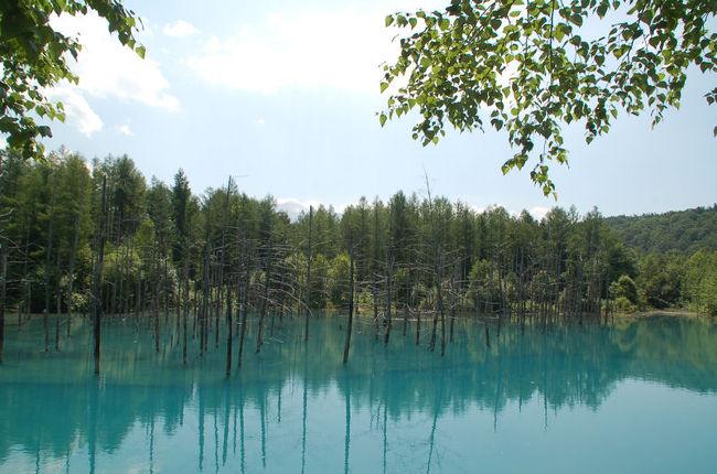 キャンプに来ると、設営や撤収に多くの時間を取られてしまい、観光が後回しになりがちなのですが、上富良野町のキャンプ場には二泊するので、二泊目の昼間は少し観光することにしました。<br /><br />まずは、美瑛(びえい)にある青い池という名前の青い池を見学しました。名前の通り、本当に青い池でした。<br /><br />何と、私たちが訪れたあとに台風9号が青い池を直撃し、一部が崩壊してしまったとのことです。池の色も茶色に変わり、現在は閉鎖中だとか。一日も早い普及を祈ります。<br /><br />なお、このアルバムは、ガンまる日記:青い池という名の青い池を見学する[http://marumi.tea-nifty.com/gammaru/2016/08/post-2e39.html]<br />とリンクしています。詳細については、そちらをご覧くだされば幸いです。