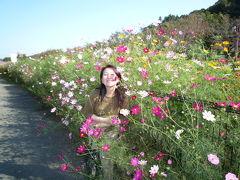 片倉城跡公園・湯殿川のコスモス 2008/10/13