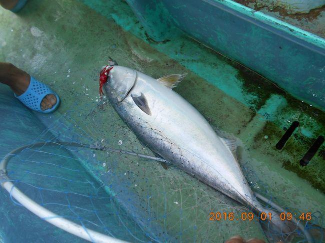 9月です<br />秋魚に突入していきます<br />しゅっぱなはワラサから<br />出船時増殖していきます