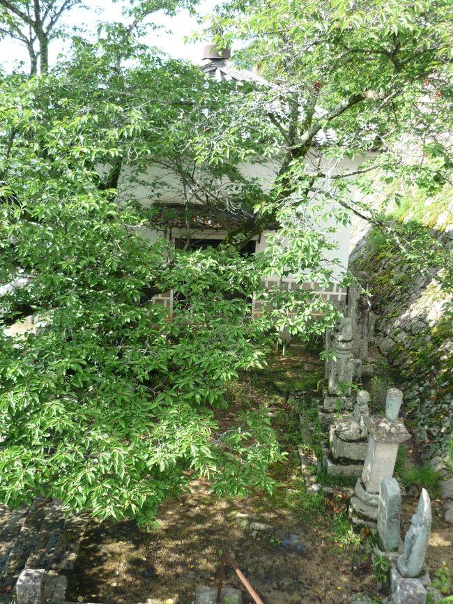 美術館を出て、頼久寺のお庭を堪能したあとは・・・<br />・紺屋川沿いに街並みを歩く<br />・商店街を歩く<br />・薬師院<br />・松連寺<br />・さらに、これらのお寺の奥にある道の高低差を楽しむ<br /><br />落ち着いたレトロさと、若々しい活力。そして私にとっては、行き当たりバッタリの楽しさを思い出すことができたステキな旅になりました