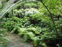 夏の優雅な南イタリア周遊旅行♪ Vol283(第16日) ☆Isola d'Ischia/Forio:美しい植物園「Giardini La Mortella」 「Valle」を鑑賞♪