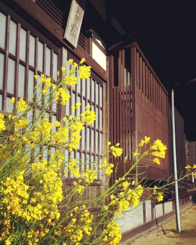 松山市内で車を借りて、ドライブ。<br />この日は、内子町の石畳の宿を予約したので、そちらに向かいます。<br />道中、どこも菜の花がとても綺麗でした。