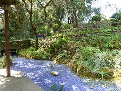夏の優雅な南イタリア周遊旅行♪ Vol297(第16日) ☆Isola d'Ischia/Forio:美しい植物園「Giardini La Mortella」 「Glorieta」青い石の池とユリの花♪