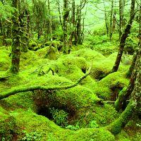 ☆まるでジブリ!北八ヶ岳の苔の森☆