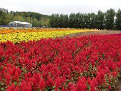 北海道中富良野~あえてラベンダーが咲いていない今、行ってみた!