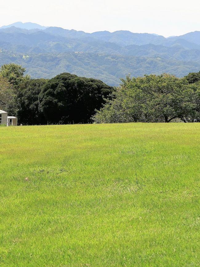 「マザー牧場」は、千葉県富津市田倉、鹿野山の隣の鬼泪山(きなだやま)の山頂付近に位置する、牧場のテーマパーク。<br /><br />広い園内には牧畜が多種(牛、馬、ヤギ、羊、豚、アヒル、ダチョウ、ラマ、アルパカ等)飼育され、触れ合いを売りにする。約150頭の羊の群れを牧羊犬が誘導する「ひつじの大行進」、羊の毛刈りで有名なシープショーが見られるアグロドーム、東京湾を一望可能な観覧車を擁する遊園地『わくわくランド』、高さ21メートルのバンジータワー、マザー牧場オリジナルの乳製品やハム、ソーセージなどを扱った土産物店、ジンギスカン鍋レストラン、いちご狩り、ブルーベリー狩り、フルーツトマト狩りが楽しめるフルーツ農園、長期滞在も出来る宿泊コテージなどがある。<br />(フリー百科事典『ウィキペディア(Wikipedia)』より引用)<br /><br />マザー牧場 については・・<br />http://www.motherfarm.co.jp/