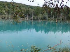 北海道美瑛町~青かった青い池、美瑛選果で満足のランチをしてきた!