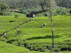 (27)2012年GWスリランカの旅8日間(7)ペーラーデニア植物園 ヌワラエリヤ(ランボダ滝 紅茶工場 市内散策) ピンナワラの象の孤児園