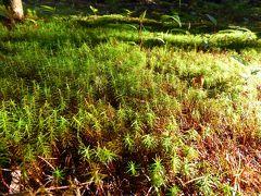 夏の優雅な浅間高原バカンス♪ Vol28 ☆嬬恋村:最後の夏の輝き 浅間高原を眺めて♪
