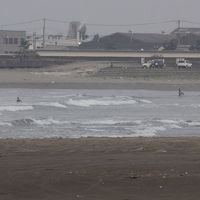 平井海岸でバードウォッチング [2015](1)