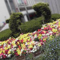 品川区のお花可愛いスポット 色々 (^ω^ )?★