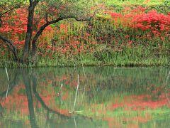 岐阜県海津郡津屋川の真っ赤な彼岸花ロードを歩く♪
