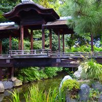 薄の穂が光り、揺れる初秋の静かな庭 〜渉成園 枳殻邸〜