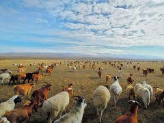 モンゴル リアル遊牧民生活2016