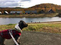 ワンコと一緒旅2016☆紅葉の羽鳥湖高原レジーナの森へ♪1日目