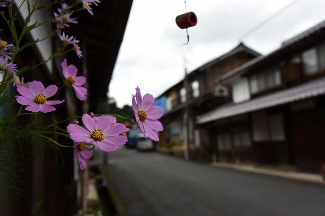 うんざりするような異常さで、今にも溶けてしまいそうだった夏の暑さも一息ついたので、「海の京都」を中心に、京都北部をじっくりと巡って来ました。<br /><br />旅の行程<br /> 9月30日 加悦、伊根<br />10月01日 宮津、黒谷、美山<br /><br />京都府与謝郡与謝野町加悦は、江戸時代から昭和初期にかけて、高級織物「丹後ちりめん」で隆盛を極めた所で、通称「ちりめん街道」と呼ばれる旧街道に沿って町が開けています。<br /><br />丹後国は室町時代以前から絹織物を産したところで、「丹後国赤あしぎぬ」、「丹後精好」、「丹後つむぎ」などの高級品も生産されていました。<br /><br />しかし、桃山時代に中国から泉州堺に伝来した「ちりめん織り」の技術が、その後京都西陣に伝わり、「御召ちりめん」や「京ちりめん」として発展すると、それまで人気だった「丹後精好」などが西陣の「ちりめん」に押されて日に日に相手にされなくなり、苦しい状況が続きます。<br /><br />これに危機感をおぼえた丹後国では、江戸時代中期に加悦の手米屋小右衛門(てごめやこえもん)らが京都西陣の機屋に奉公人として入り、糸撚りやシボの出し方など、秘伝のちりめん織り技術を丹後へ持ち帰り、「丹後ちりめん」の生産が始まります。<br /><br />峰山藩、宮津藩の保護のもと、瞬く間に丹後地方の地場産業として根付いた「丹後ちりめん」は、その後も発展を続け、滋賀県の長浜や新潟県の十日町へと「ちりめん織」の技術が広まっていくことになります。<br /><br />明治時代から昭和初期にかけて「丹後ちりめん」の一大生産地となった加悦は、丹後地方と京都を結ぶ物流拠点だったことも相まって、その発展ぶりは目覚ましく、町を南北に貫く通称「ちりめん街道」と呼ばれる旧街道沿いには、ちりめん産業がもたらした建物や商店が軒を連ね、多くの人や物で賑わいます。<br /><br />白漆喰を塗籠めた切妻屋根平入りの中2階建に、虫籠窓や格子をしつらえた伝統的な町家が連なる「ちりめん街道」の町並みは、一部に煙出しの越屋根や卯建をあげた町家も見受けられます。<br /><br />「丹後ちりめん」の歴史とともに歩んできたこの町並みを歩くと、今もどこからともなく「ガチャ、ガチャ」という懐かしい機音を響かせて「丹後ちりめん」が織られていて、この町が単に観光地として作られたものではなく、今も地域の皆さんの生活の場であることを教えています。