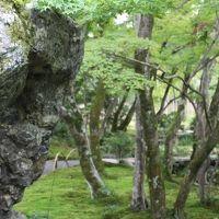 【京の絶景庭園をめぐる】宝厳院2016秋の特別拝観 石と苔とたたなづく青紅葉