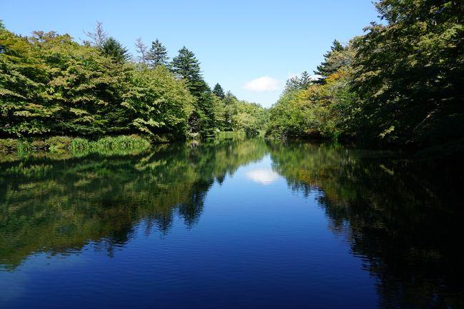 9月 22日(火)、晴れ<br />初秋の軽井沢 - 2日目、中軽井沢、雲場池、マロウド軽井沢でランチ!です。朝、中軽井沢の宿の周りを散策した後、雲場池へ。その後、今日も別のホテル、マロウド軽井沢でランチを楽しみました。<br /><br />表紙の写真は、秋晴れの下、鏡のような湖面に木々と雲が写っている「雲場池」です。綺麗でしょう!正面の雲が湖面に写っている様は、まるで雪を頂いた富士山のようですね。軽井沢で一番、好きな場所です。<br /><br />るるぶフリー軽井沢 http://www.rurubu.com/free/karuizawa.asp<br />いつも軽井沢(ZENRIN) http://itsumo-k.net/<br />軽井沢free http://www.karuizawa-free.com/formmail2.html<br />軽井沢観光協会 http://karuizawa-kankokyokai.jp/<br />軽井沢ホテルブレストンコート http://www.blestoncourt.com/<br />ホテルマロウド軽井沢 http://www.marroad.jp/karuizawa/<br />
