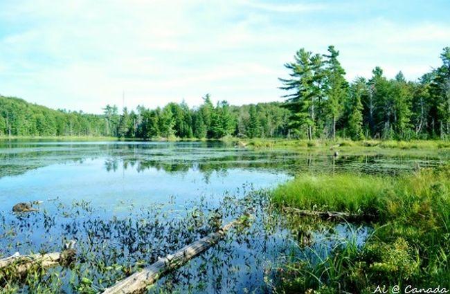 ケベック州ガティノーにある大きな自然公園をお散歩