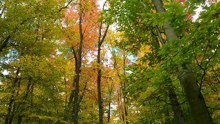 38人で行く 新・紅葉のカナダ絶景ハイライトその7〜アルゴンキン州立公園・トロント〜