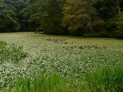 神戸市立森林植物園で森林浴