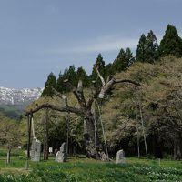 置賜桜回廊(ウォーキング編)