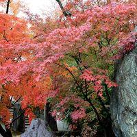 そうだ京都へ行こう…�新幹線で行く紅葉最盛期三泊四日の旅