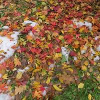 紅葉真っ盛りの札幌へ!残雪と紅葉を両方愛でる旅。