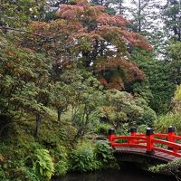 箱根の紅葉はまだまだ先(10月25日)