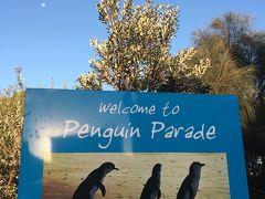 新婚旅行以来◯◯年ぶりのオーストラリアへ☆ペンギンパレードへ  後半