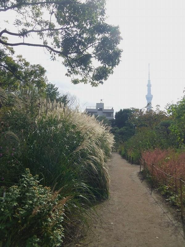 先日「正直散歩」なるTV番組でこのあたりを採り上げていました。<br /><br />筆者は東京西部住まいで、隅田川の向こう岸、本所や向島はまったく<br />縁のない所です。 ですが、時代小説や芭蕉あるいは明治時代の文豪<br />の話に接するにつけ、いつか散策したいと考えていました。<br /><br />今回テレビ番組を見たので、このあたりを散歩してきました。<br />スカイツリーには行っていません。 ゴメンナサイ<br />