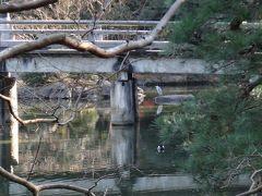紅葉の名残を楽しむ12月の京都