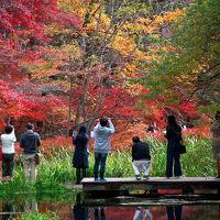 どこもかしこも秋色の軽井沢を愛犬ハルと一緒に