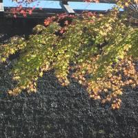 三州・足助 早秋の色づく香嵐渓から八丁味噌の里・岡崎 ぶらぶら歩き暇つぶしの旅−2