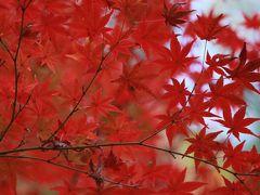紅葉を探して。京都の旅2015年秋(1日目~2日目)