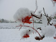 北海道 上富良野町~雪降る中、美術館とグルメで文化の日を過ごす!