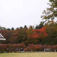 箱根の紅葉はまだまだ先(11月1日)