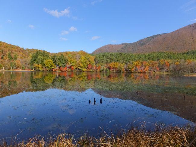 ずーっと前から行ってみたかったレジーナの森。<br />紅葉の季節に予約がとれたので、ワンコと一緒に行ってきました。<br /><br />1日目はお天気がいまいちでしたが、紅葉もちょうど見頃でとっても楽しい2日間でした。