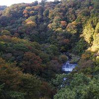 箱根の紅葉はまだまだ先(11月4日)